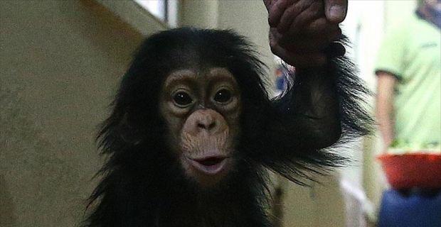 Çinli bilim adamları maymun klonladı