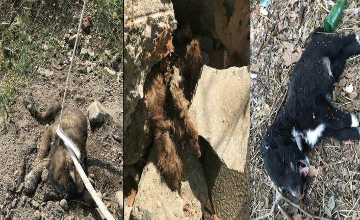 3 yavru köpek vahşice öldürüldü