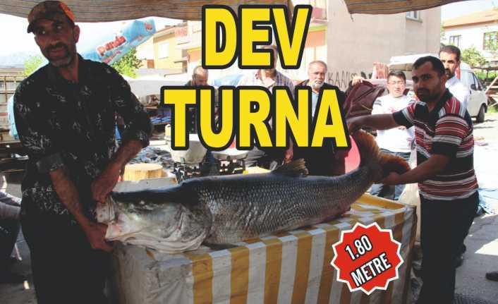 Erzincan'da oltaya 83 kiloluk dev balık takıldı