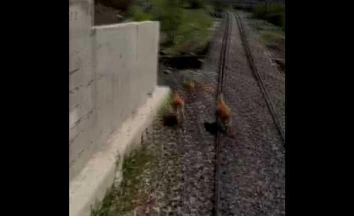Trenin Altında Kalmaktan Son Anda Kurtuldu