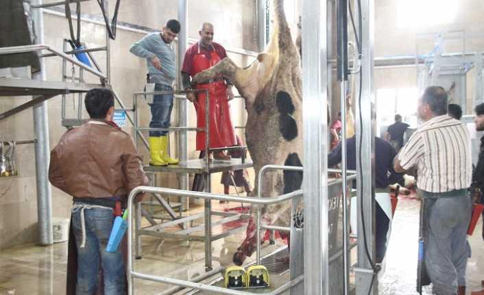 Et ve Süt Kurumu Erzincan'da kesime başladı