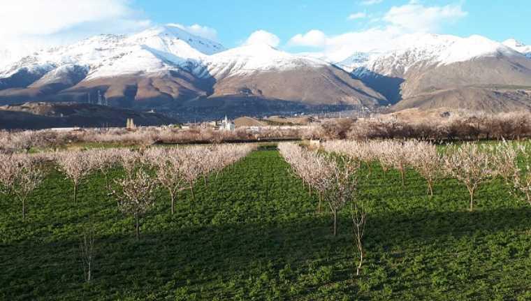 Erzincan'da kayısı ağaçları rengarenk görüntüler ortaya çıkardı