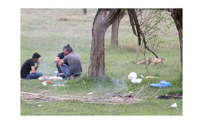 Erzincan'da piknikçiler tilkiyi besledi