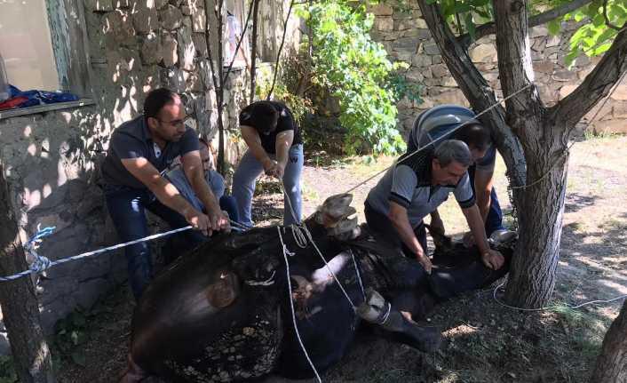 Erzincan'da 27 bin 200 Kurban Kesildi
