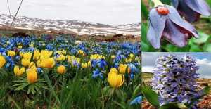 Erzincan'ın Çiçekleri Renk Cümbüşü Oluşturuyor