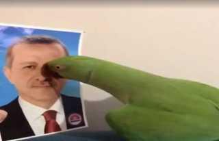 Cumhurbaşkanını tanıyan papağan fenomen oldu