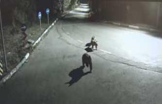 Aç kalan sakat ayı ve yavruları şehre indi