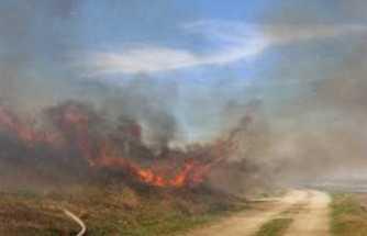 İstanbul'da makilik alanda yangın