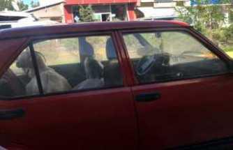 Keçinin gülümseten otomobil yolculuğu