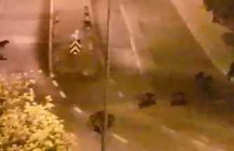 İzmir'de şok eden görüntü: Domuzlar şehre indi