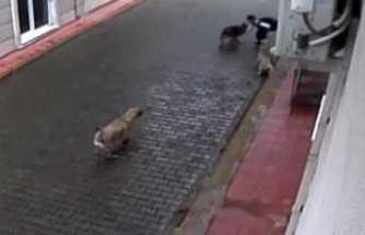 Köpeklerin saldırısına uğrayan çocuk ölümden döndü