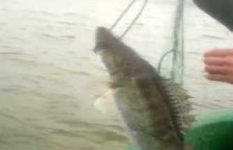 Terkos Gölünde kaçak avcılara operasyon