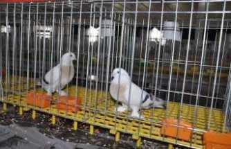 Türkiye'nin dört bir yanından güvercin severler katıldı