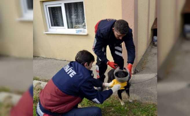 Başı bidona sıkışan yavru köpeğin yardımına itfaiye yetişti