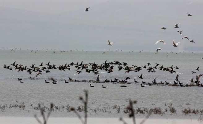 Kuş cenneti çeltikçi kuşlarıyla rengarenk