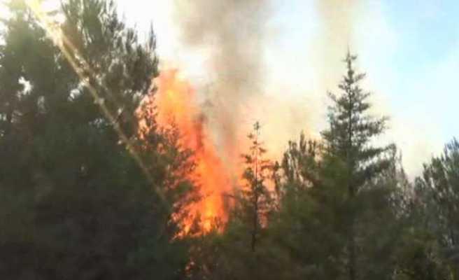 İzmir'deki orman yangını kontrol altına alındı