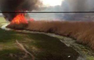 Van'da hayvan neslini tehlikeye sokan yangın